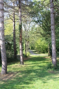Parc de Pignerolles - les arbres -